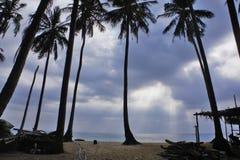 Solstråle över kokosnötpalmträdet Arkivbild