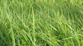 Solstråle på gräset Royaltyfria Foton