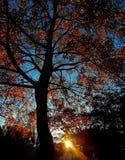 Solstråle till och med Autumn Tree arkivfoto