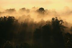 solstråle till och med misten och trät Royaltyfri Fotografi
