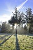 Solstråleho skogen Fotografering för Bildbyråer