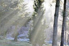 Solstråleho skogen Arkivbilder