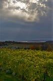 Solstrålesken på vingård Arkivbild