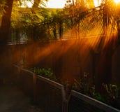 Solstrållandskap Arkivbild