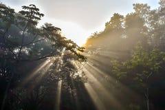 Solstr?lar i skogen royaltyfria bilder