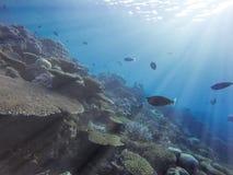 Solstr?lar som tr?nger igenom till och med havhavsvatten och skiner p? tropiska rever f?r en korall arkivbilder