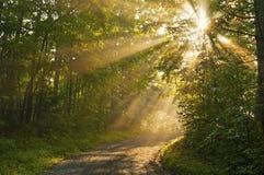 Solstrålar kikar bakifrån en trädstam. Arkivbild