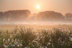 Solstrålar över dimmig äng Royaltyfria Bilder
