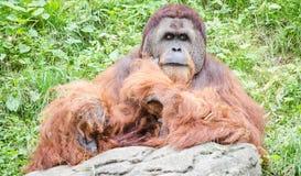 Soltanto allo zoo Fotografie Stock Libere da Diritti