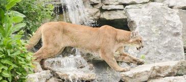 Soltanto allo zoo Fotografia Stock