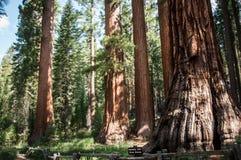 Soltero de Yosemite Fotos de archivo