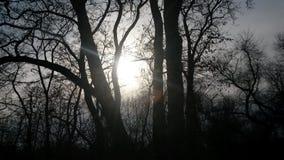 Solträd Arkivfoton