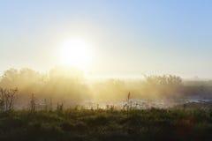 Soluppgång över ängen Royaltyfri Foto