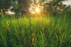 Soluppgång över ängen som täckas med vildblommor och gröna frodiga gras Fotografering för Bildbyråer