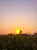 Soluppgång över cornfield Arkivbild