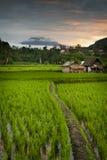Soluppgång över de Bali risfälten. Royaltyfri Bild