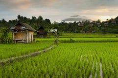 Soluppgång över de Bali risfälten. Arkivbild