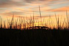 Soluppgång över den Atlantaic havöppningen arkivfoton
