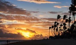 Soluppgång över den Atlantic Ocean kusten med palmträdkonturer Arkivbilder