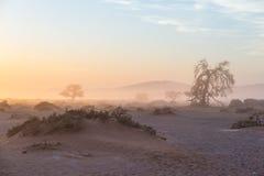 Soluppgång över den Namib öknen, roadtrip i den underbara Namib Naukluft nationalparken, loppdestination i Namibia, Afrika morgon Arkivfoto
