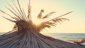 Soluppgång över den tropiska stranden och slags solskydd stock video