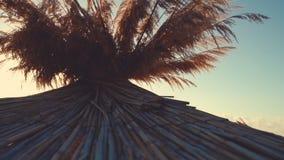 Soluppgång över den tropiska stranden och slags solskydd arkivfilmer