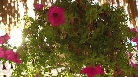 Soluppgång över den tropiska stranden och slags solskydd Blommor under paraplyet stock video