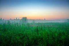 Soluppgång över det höga gröna gräset Det Tver landet Solig sommarmorgon Juli Härligt landskap Jordbruks- landskap i th Arkivbild