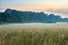 Soluppgång över en scenisk äng med naturliga blommor Livliga färger med dramatisk moln och dimma Wilhelminenaue Bayreuth Royaltyfria Bilder