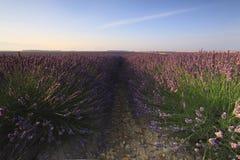 Soluppgång över ett lavendelfält, Valensole, Provence, Frankrike - Royaltyfria Bilder