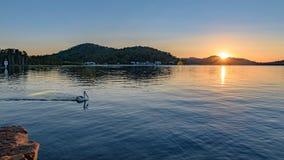 Soluppgång över fjärden med pelikan royaltyfria bilder
