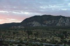 Soluppgång över Joshua Tree National Park Arkivbilder