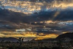 Soluppgång över Joshua Tree National Park Fotografering för Bildbyråer