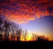 Soluppgång över poppelträd Arkivbild