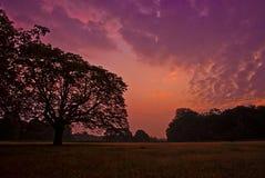 Soluppgång över Richmond Park Royaltyfri Bild