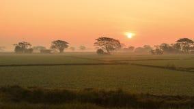 Soluppgång över risfältet Fotografering för Bildbyråer