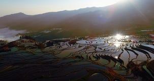 Soluppgång över risterrassfält royaltyfri foto