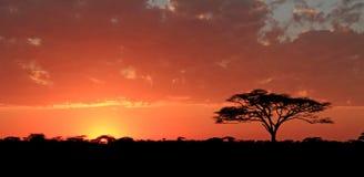 Soluppgång över Serengetien Arkivfoto