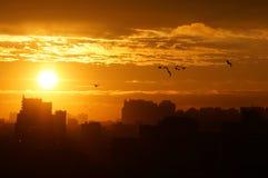Soluppgång över staden, molnen, solen och flygfåglarna Royaltyfri Bild
