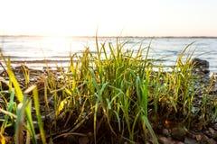 Soluppgång över stranden Fotografering för Bildbyråer