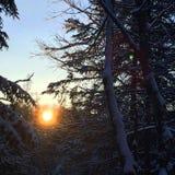 Soluppgång över swamp Arkivbilder