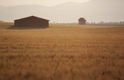 Soluppgång över vetefält och ensamt hus Royaltyfria Bilder