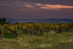 Soluppgång över vingårdarna av södra Moravia royaltyfri foto
