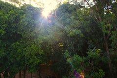 Soluppgång överst av kullen Arkivfoto