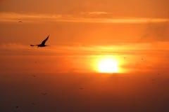 soluppgång Royaltyfria Bilder
