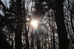 Soluppgång Arkivbilder