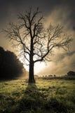 Soluppgång bak dött avlövat träd Arkivbild