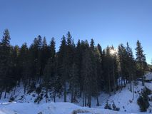 Soluppgång bak mountinsna och träden Royaltyfri Foto