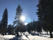Soluppgång bak mountinsna och träden Royaltyfria Bilder