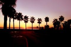 Soluppgång bak palmträden Fotografering för Bildbyråer